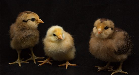 Why All the Chicken Littles Should Calm Down   Simplifying The Market
