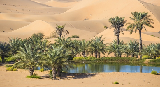 Your House Could Be the Oasis in an Inventory Desert | Simplifying The Market